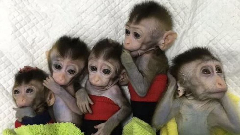 Scientists clone gene-edited monkey for circadian disorder