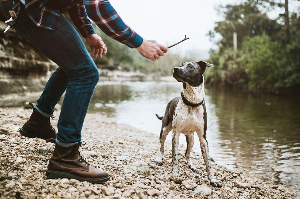 Lost Your Favorite Pet! Get the Best Dog GPS Trackers