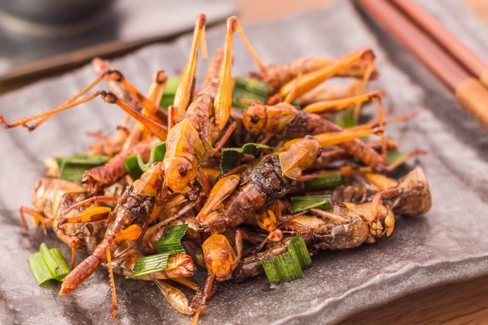 Start Eating Bugs If You Want to Live Beyond 2050